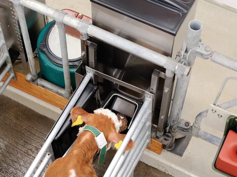 Automat für Kraftfutter - Kälber